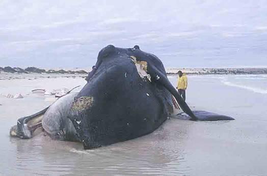 m4m-whale