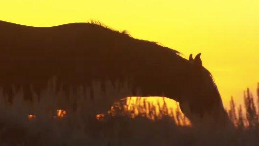 wild-horse-wild-ride-image-2